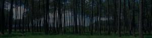 Forêt de pin des Landes de Gascogne