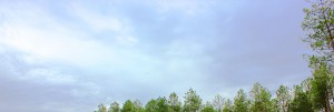 Ciel au dessus d'une forêt de pin des landes de Gascogne