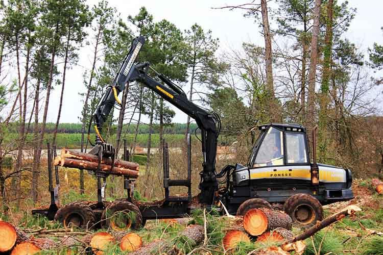 Exploitation forestiere de la foret des Landes